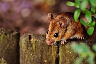 Infos zu Mäuse bekämpfen im Garten